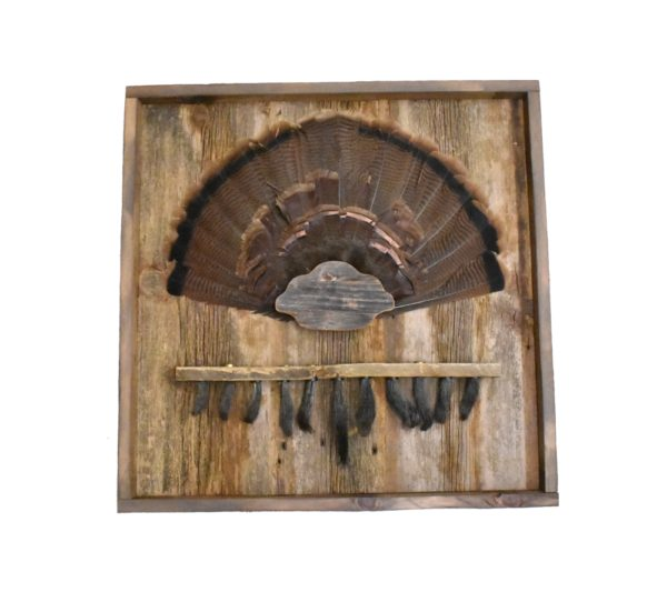 Barnwood shadow box with turkey tail cap and beard plate.